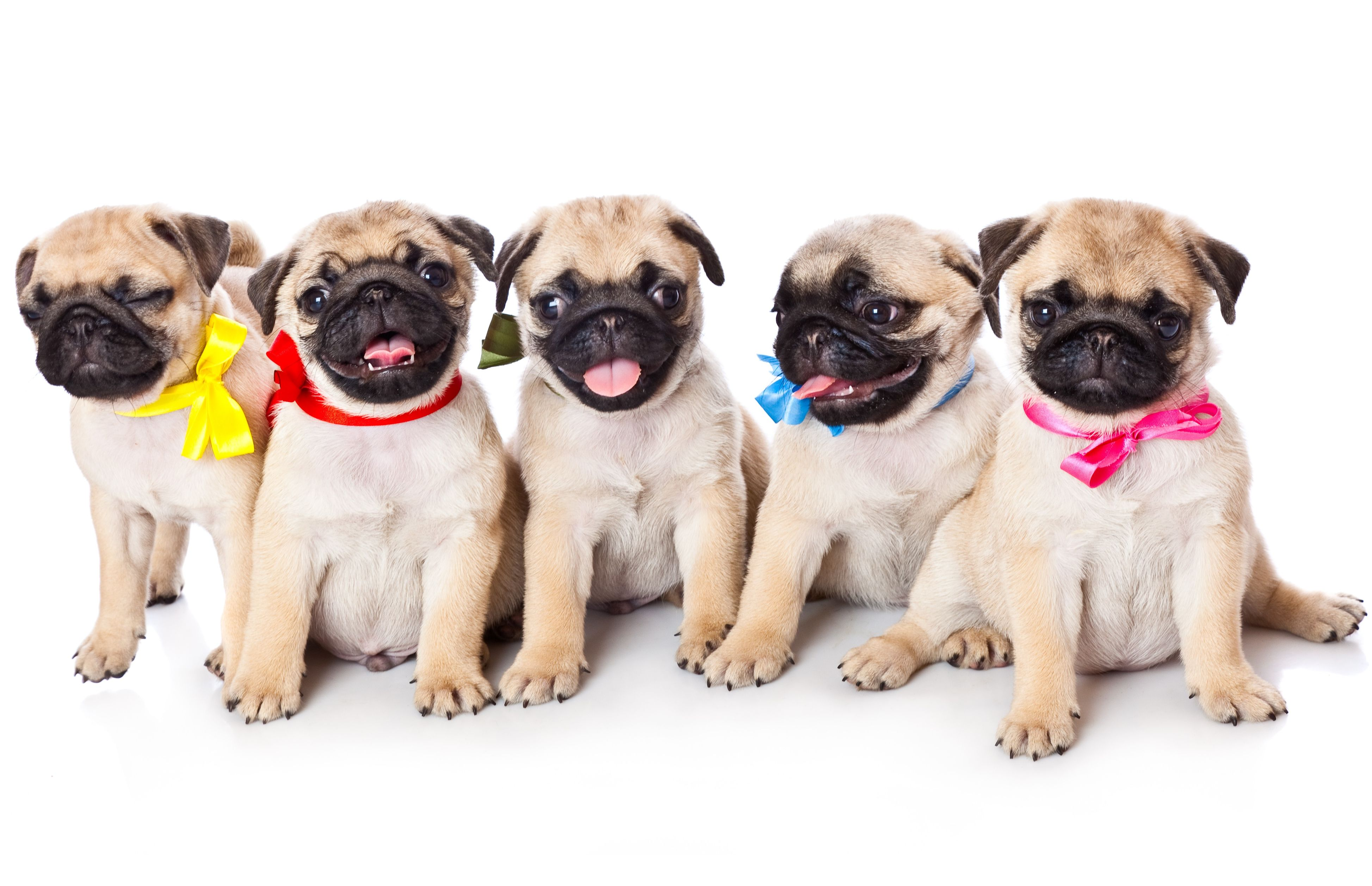 3 best apartment dogs | move for free blog