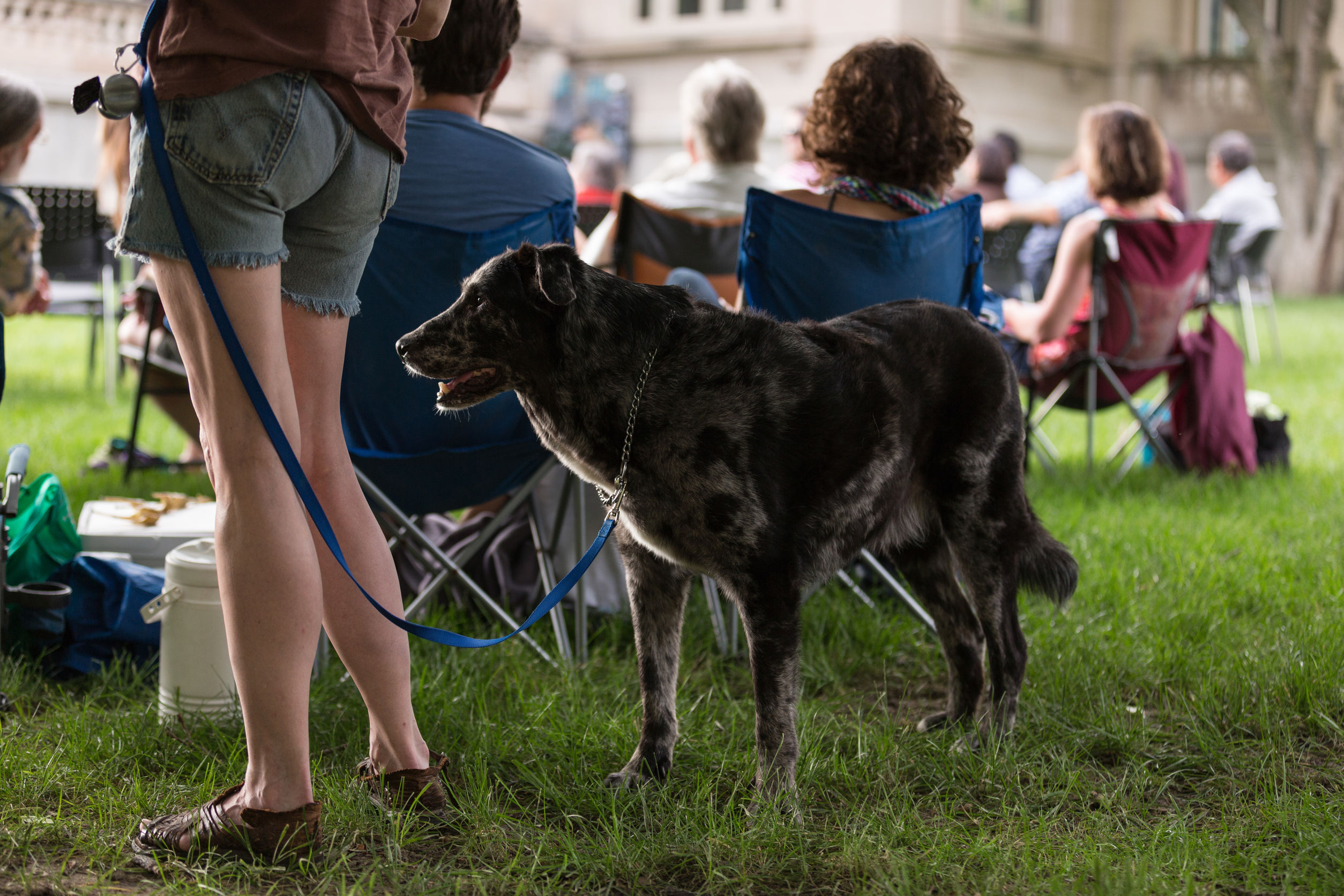 dog friendly places in Katy