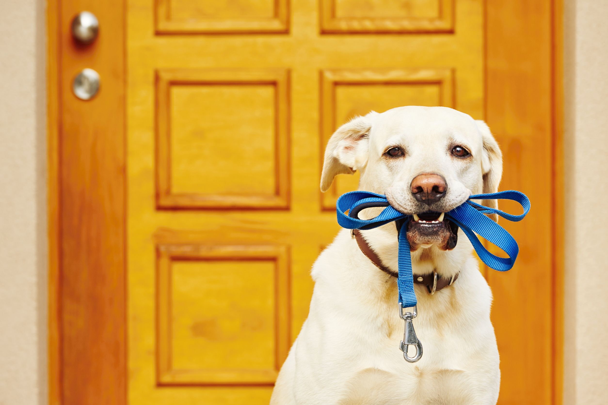 Where to Walk Your Dog in The Woodlands